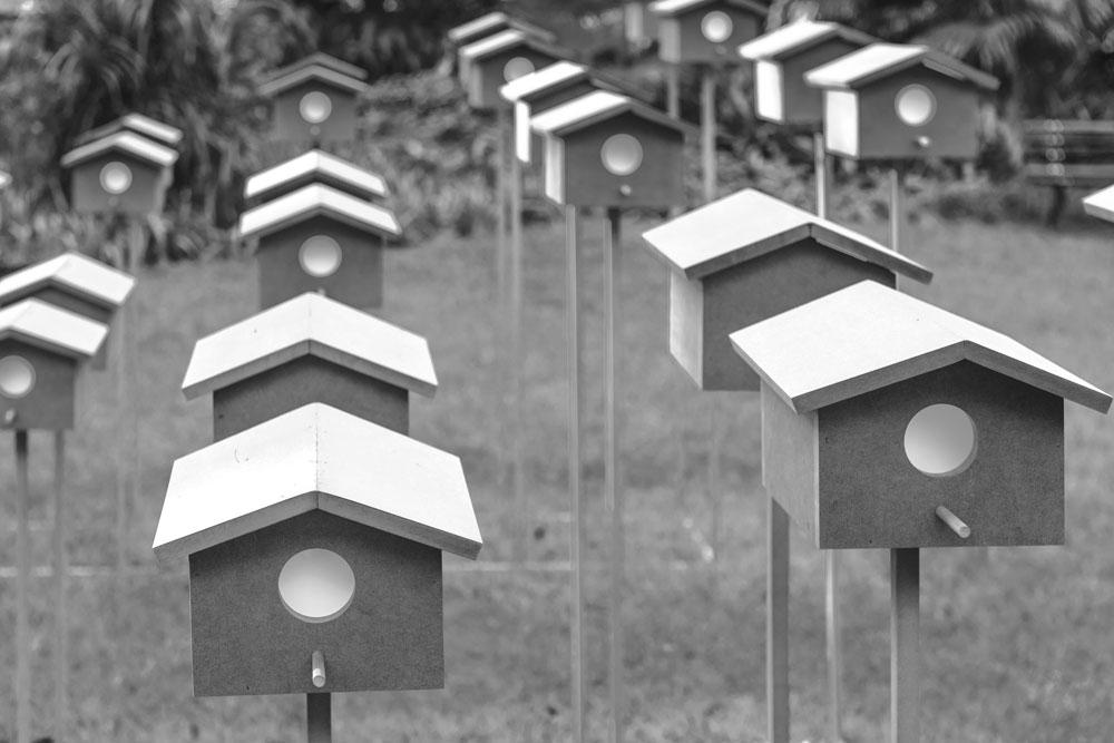 Figura 2. Detalhes das casinhas de passarinho. Foto: Ding Musa