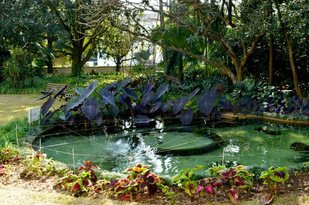 Lago com carpas da Casa-museu Ema Klabin